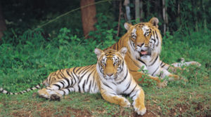 Bannerghatta-National-Park